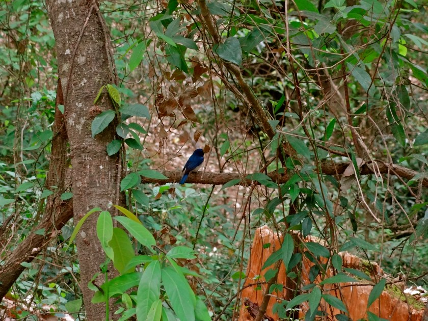 Himalayas birds, Uttarakhand birds