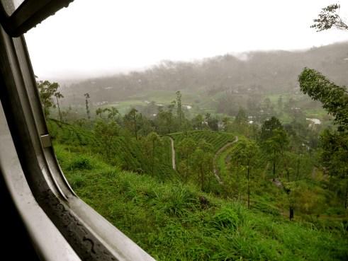 Sri Lanka tea plantations, Sri Lanka tea