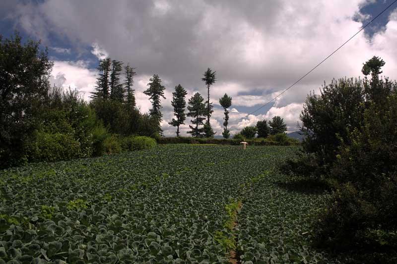 Fagu Himachal, Shimla homestays, Delhi weekend getaways