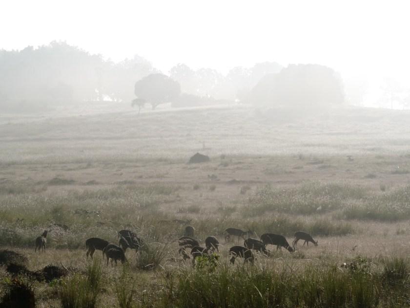 Kanha national park, Kanha photos, Kanha wildlife