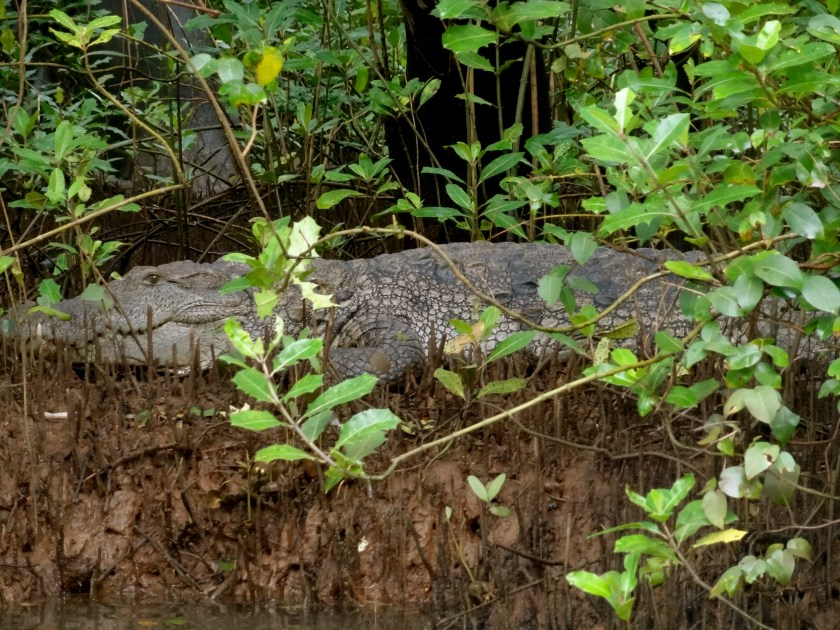 goa wildlife, crocodiles goa, goa monsoon, goa backwaters