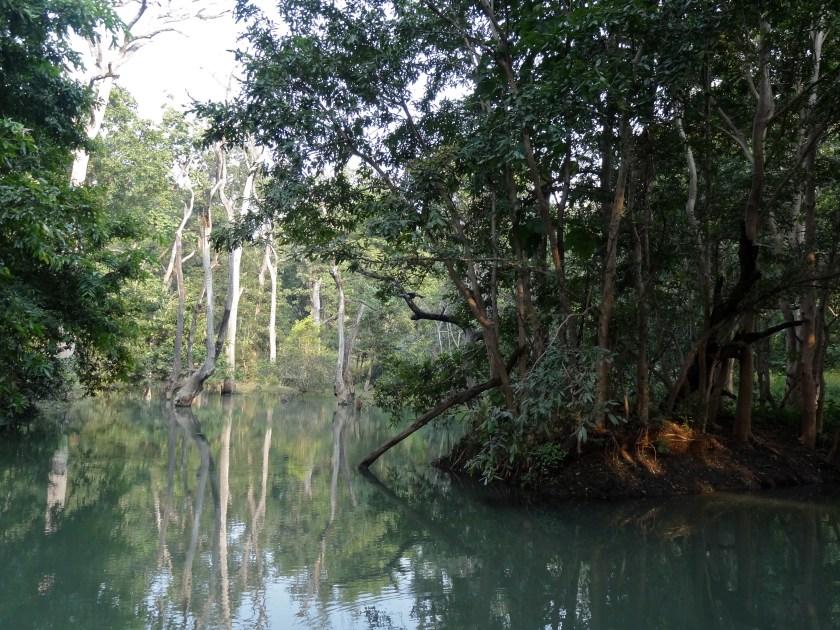 Panna madhya pradesh, panna tiger reserve, panna
