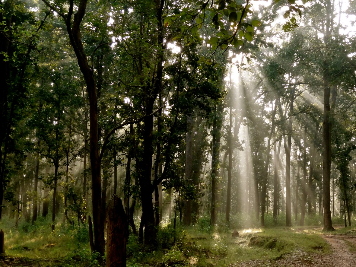Kanha forest, Kanha national park India