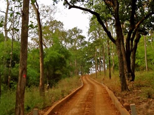 tadoba, tadoba national park, tadoba tiger reserve
