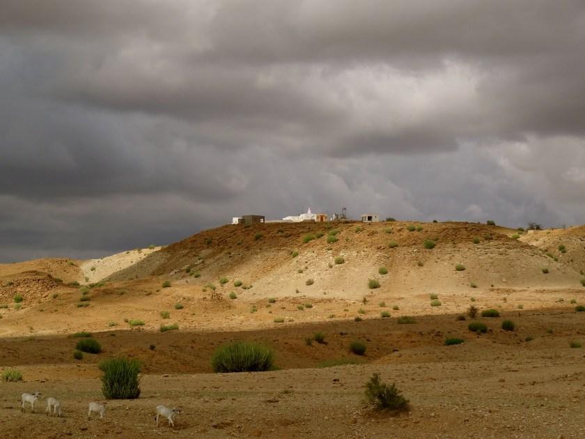 Thar desert, Rajasthan desert, desert life Rajasthan