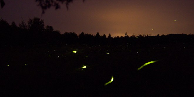 purushwadi fireflies, purushwadi maharashtra, grassroutes