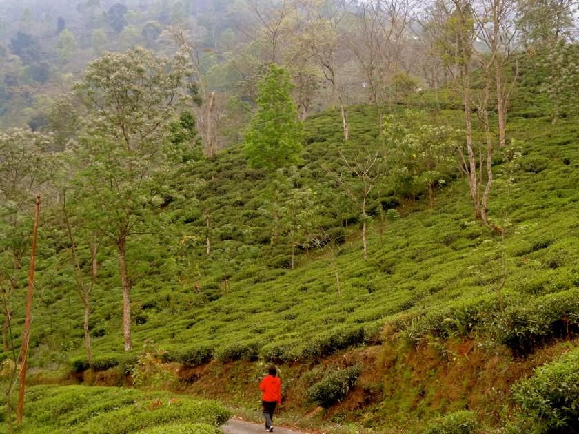 hiking from darjeeling to sikkim