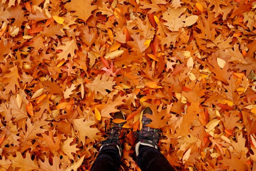 fall photos, fall color photos, fall nyc