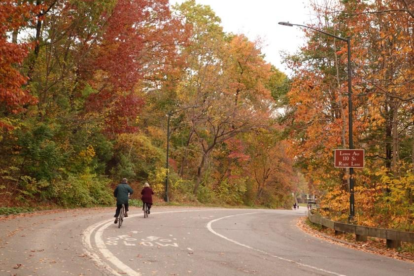 central park new york, fall colors central park, fall photos nyc