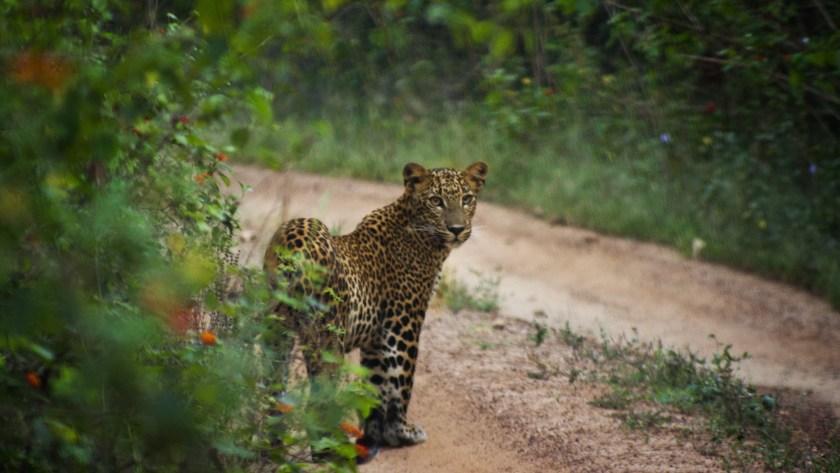 Yala national park, airbnb yala, airbnb sri lanka