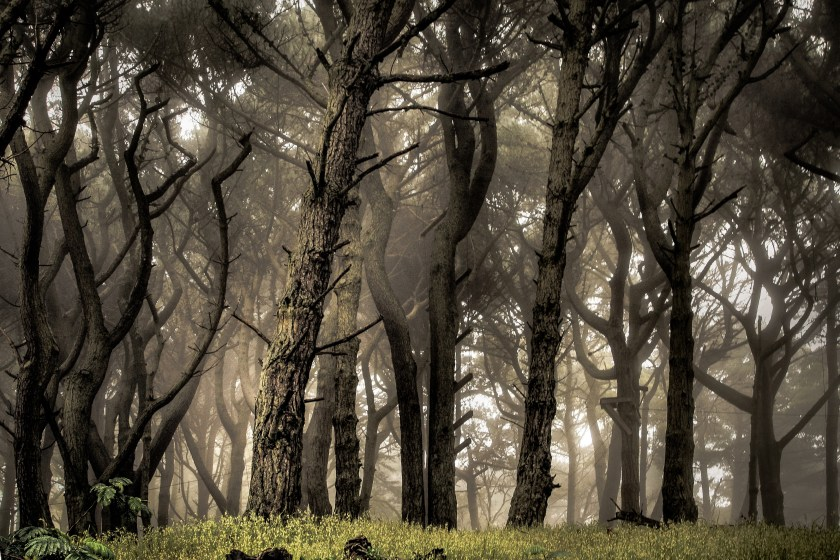 San Francisco forest, travel contest blogs, travel contest india