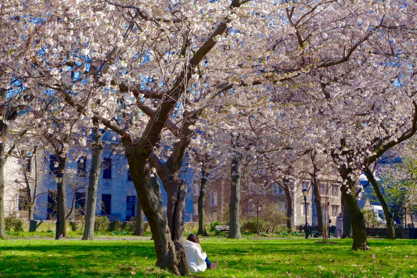 cherry blossom new york, travel motivation, travel inspiration blogs