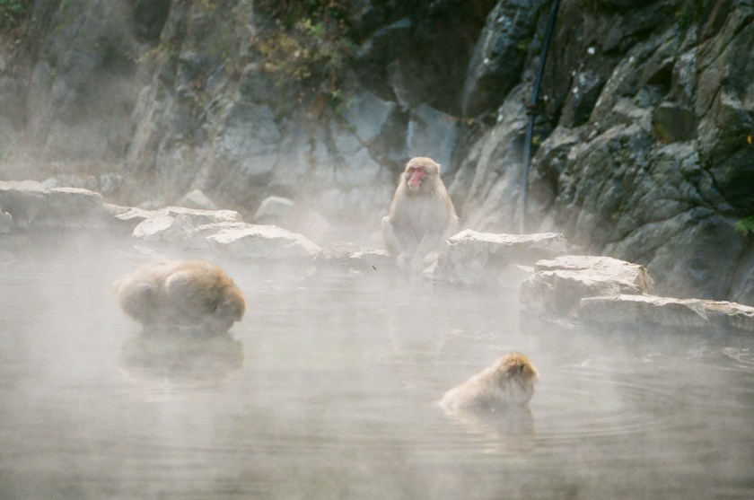 snow monkeys japan, japanese traditions, jigokudani park japan
