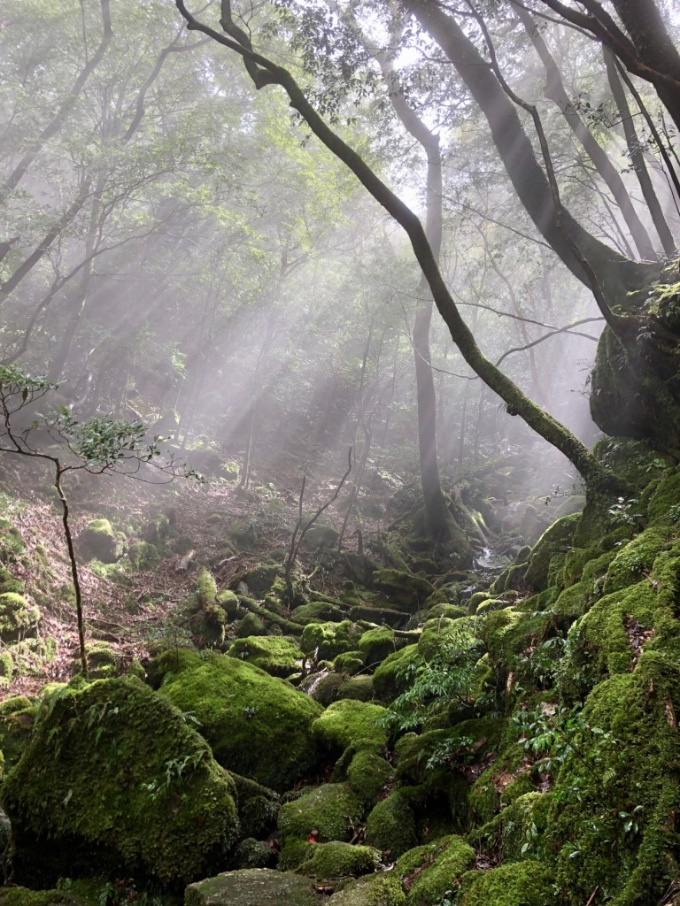 Yakushima island, Japan travel guide, why visit Japan