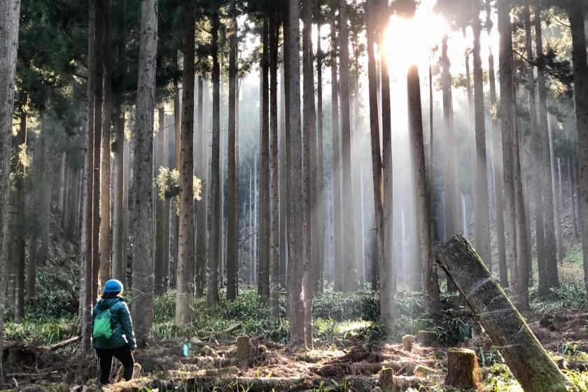 Japan solo travel