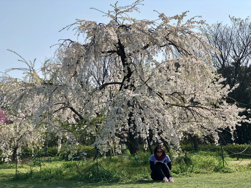 cherry blossom japan, reasons to visit Japan, solo travel japan