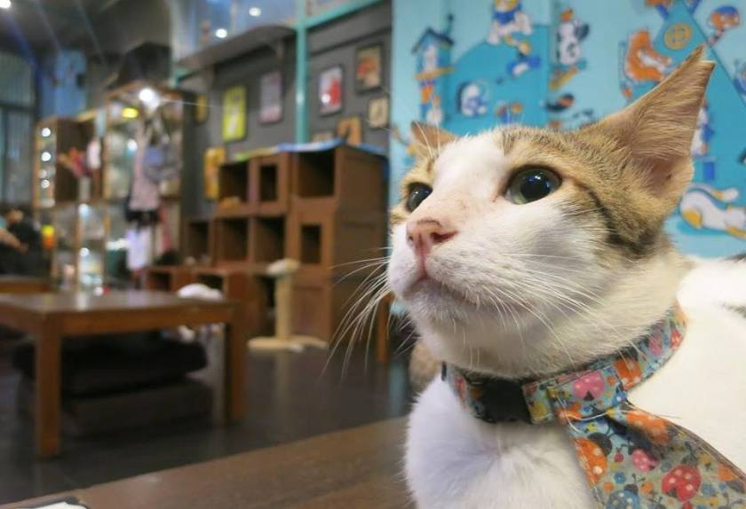 cat cafe studio