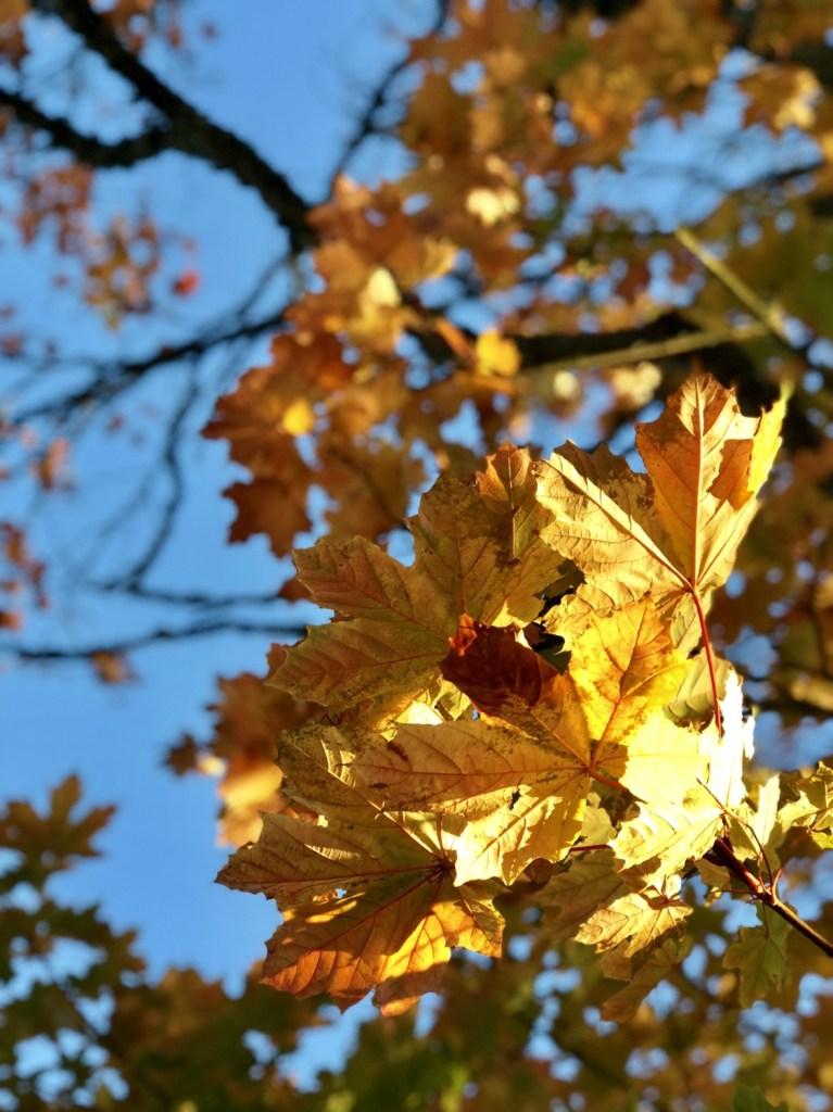 autumn scotland, scotland travel blog, aberdeenshire travel