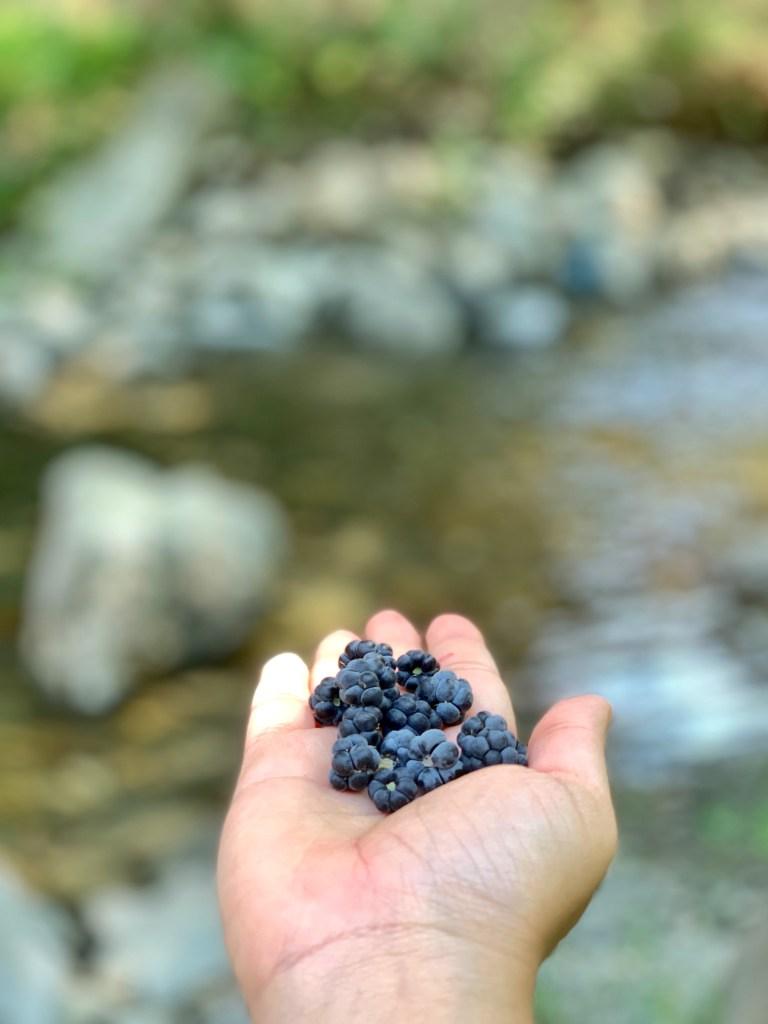 mulberries uzbekistan, vegan food uzbekistan