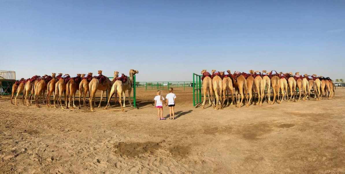 things to see in Oman - camel race