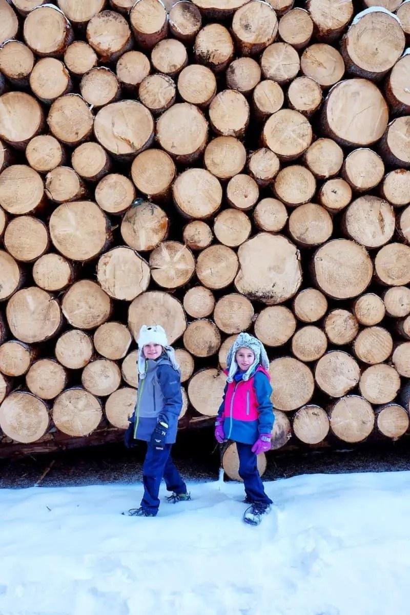 Cutted norwegian Spruce in Paneveggio Natural Park, Passo Rolle- close to San Martino, Trentino