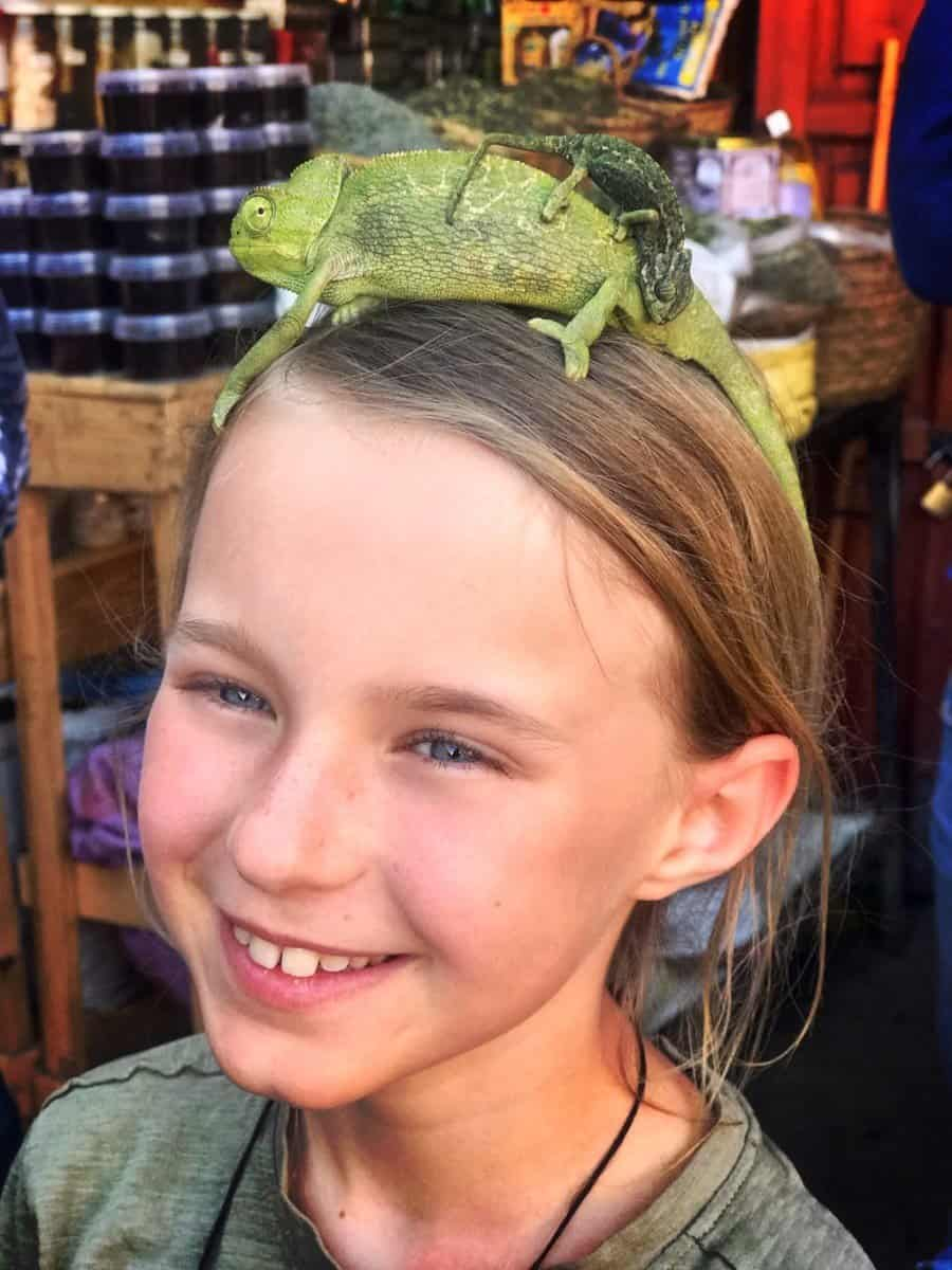 Marrakech with kids - best place in the Souq is the place where kids can hold Chameleon