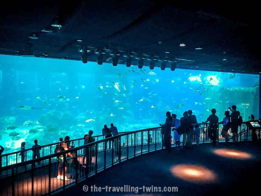 one of the place to visit in Singapore with kids is S.E.A Aquarium on Sentosa Island,  best things in singapore,  things to do in singapore today,  singapore points of interest,