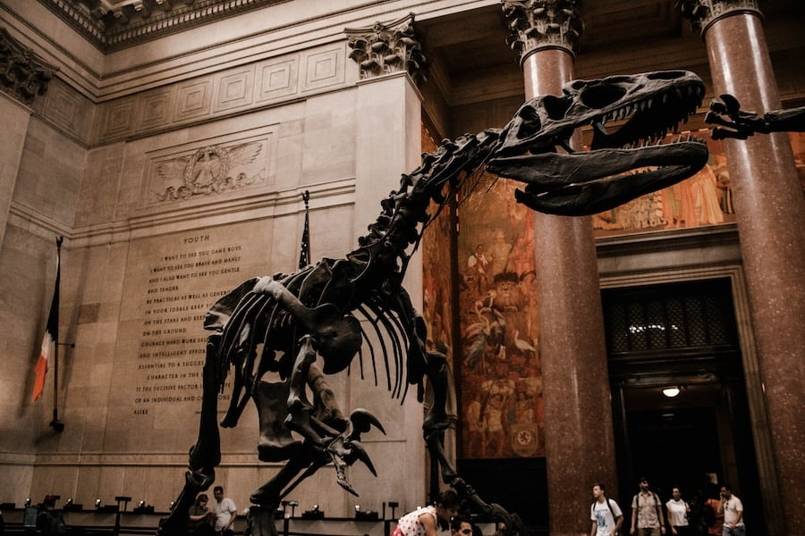 the New York City natural history museum, Natural history New York