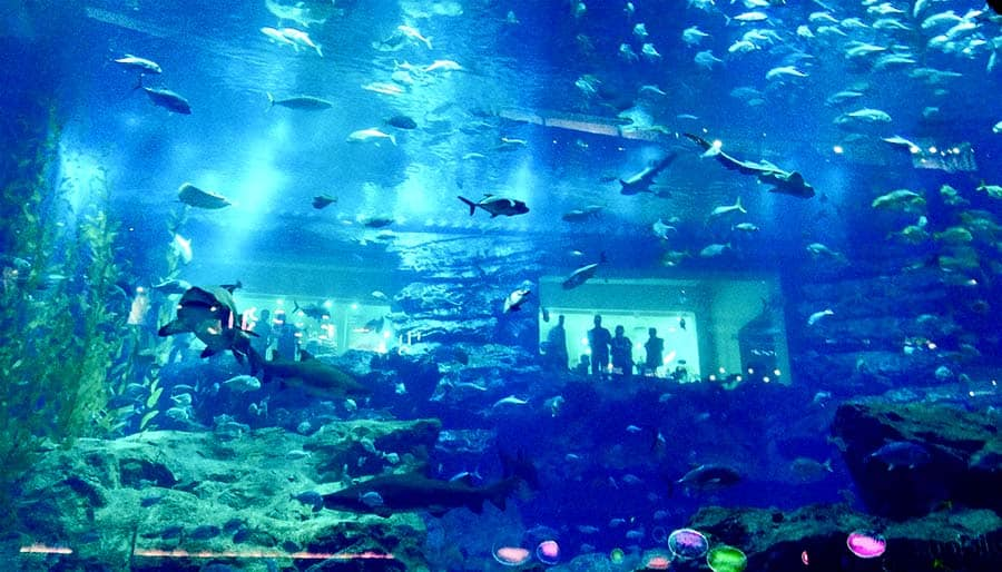 million gallons of water  dubai mall aquarium	 aquarium dubai whale sharks