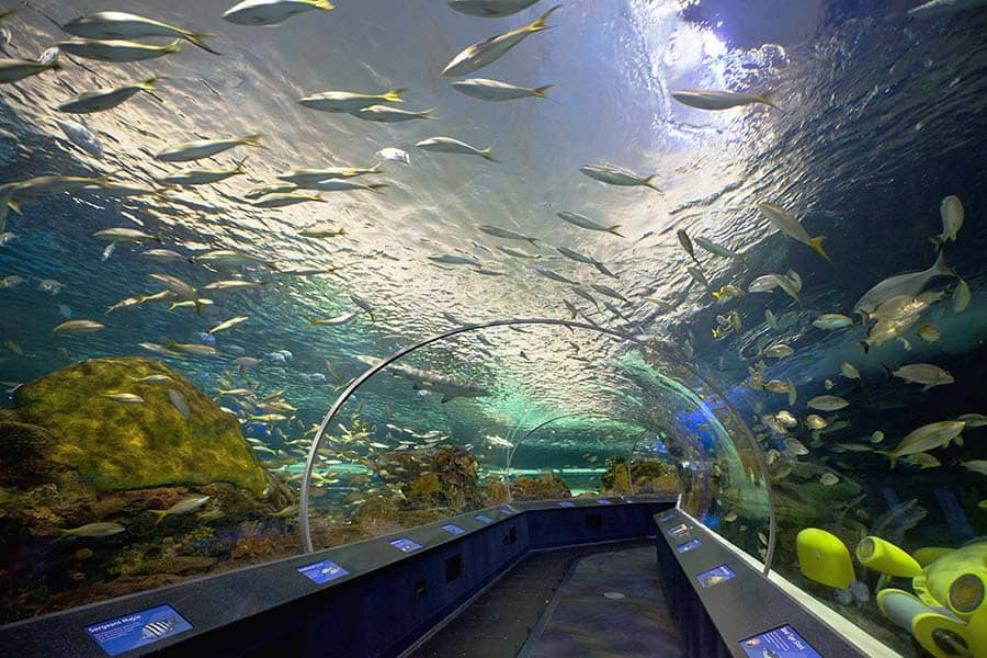 worlds aquariums - tunel in aquarium