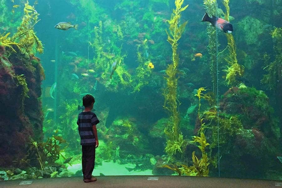 kid in aquarium, aquarium with million gallon tank