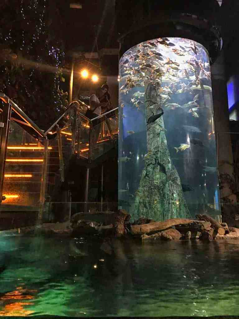 Best Aquariums in the World