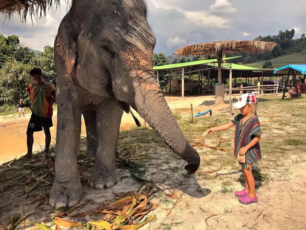 Elephant Jungle Sanctuary - girls feeding elephant