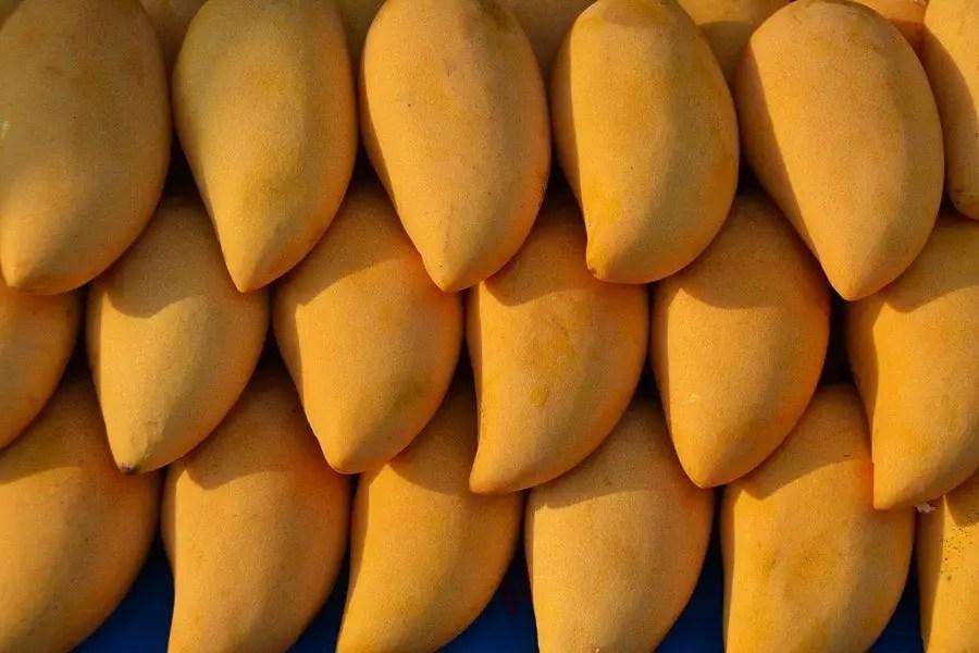 mango - very popular sweetest fruit from east asia best eaten raw,  good for vegan ice cream