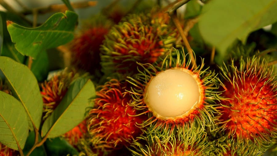 rambutan with white fruit is my  favorite southeast asian fruit make great dessert