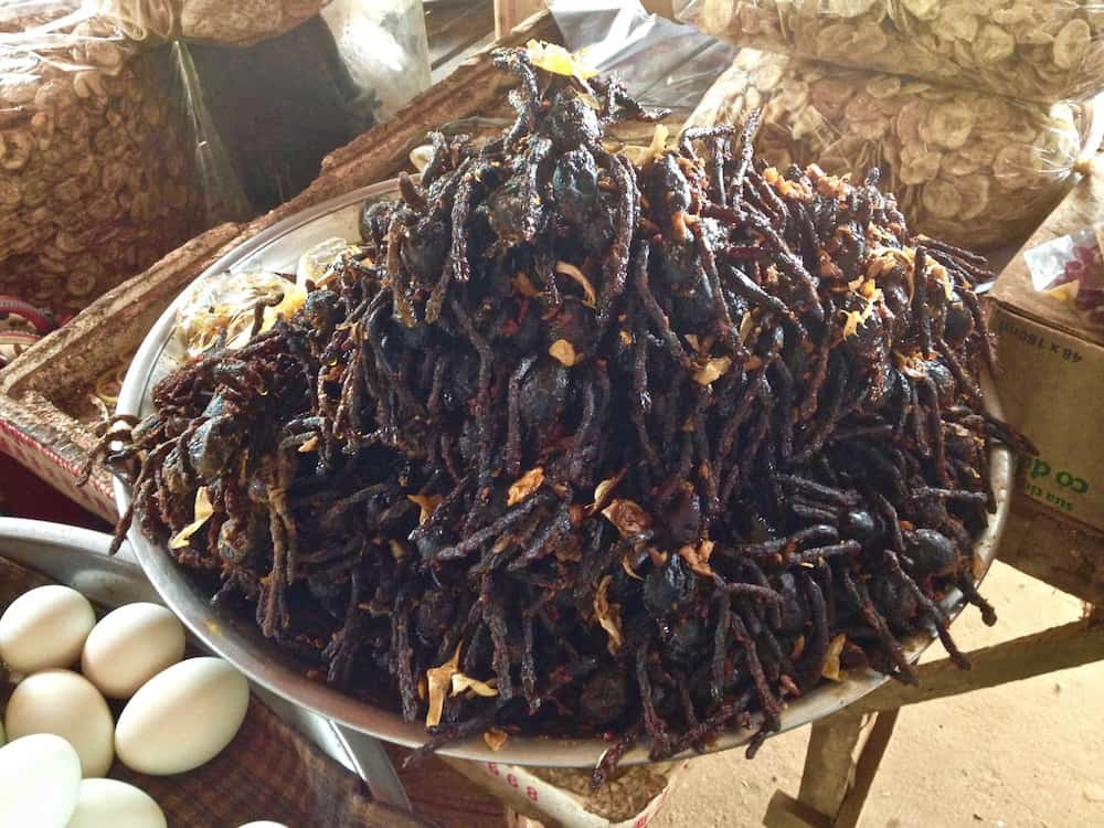 in search of strange eaten foods   - tarantula