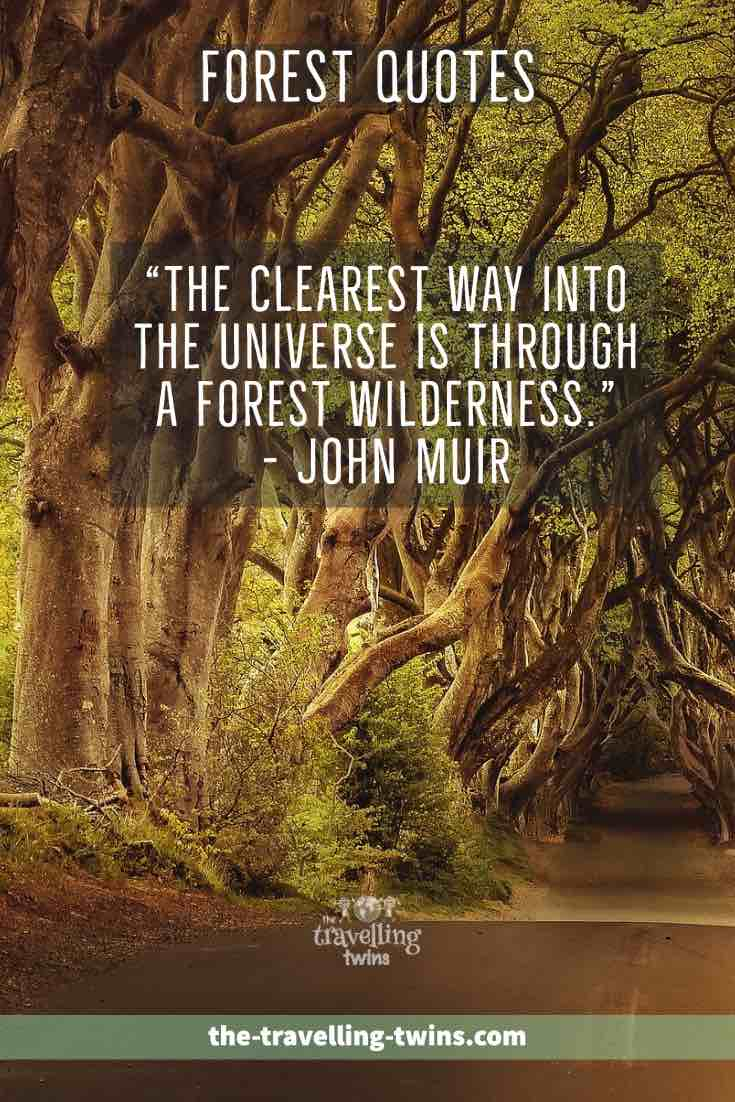 quotes about forest