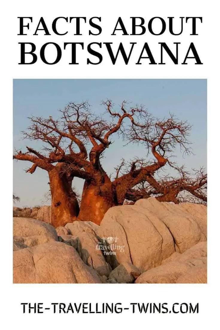 Botswana facts baobab