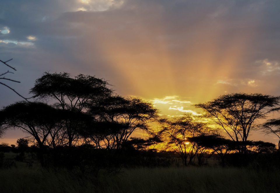 Tansania-Serengeti-Safari-sonnenaufgang