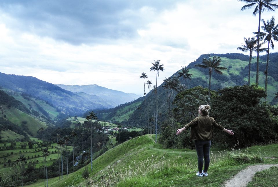 Kolumbien-Cocora-Valley-Wachspalmen