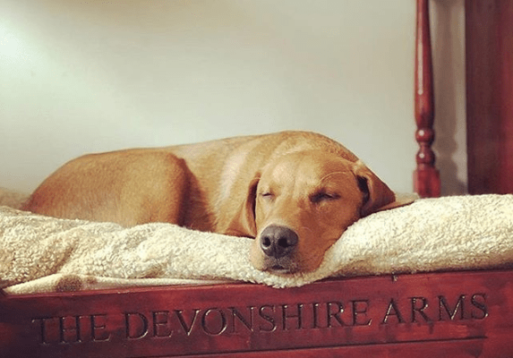 This 4-Star Hotel In The Yorkshire Dales Has Four-Poster Beds For Your Pooch