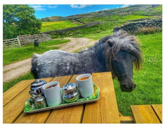 You Can Now Have Cream Teas & Meet Tony The Pony On Ravenseat Farm