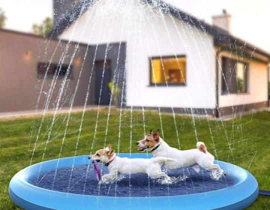 You Can Now Get A Doggy Paddling Pool With Sprinklers For Just £25.99