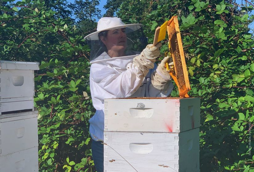Beekeeper in white protective gear holding a tray from the white wooden hive; also holding a yellow brush; agains deep green shrubs