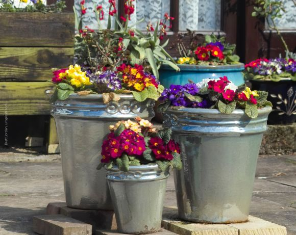 2 large and 1 small patio plant containers, with metallic glaze; 1 large blue pot behind; all filled with purple, red, yellow and white flowers