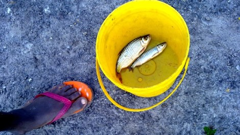 Fishing in Niger Delta