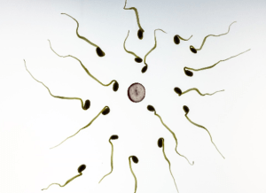 Important Facts That You Need To Know Before Having A Vasectomy