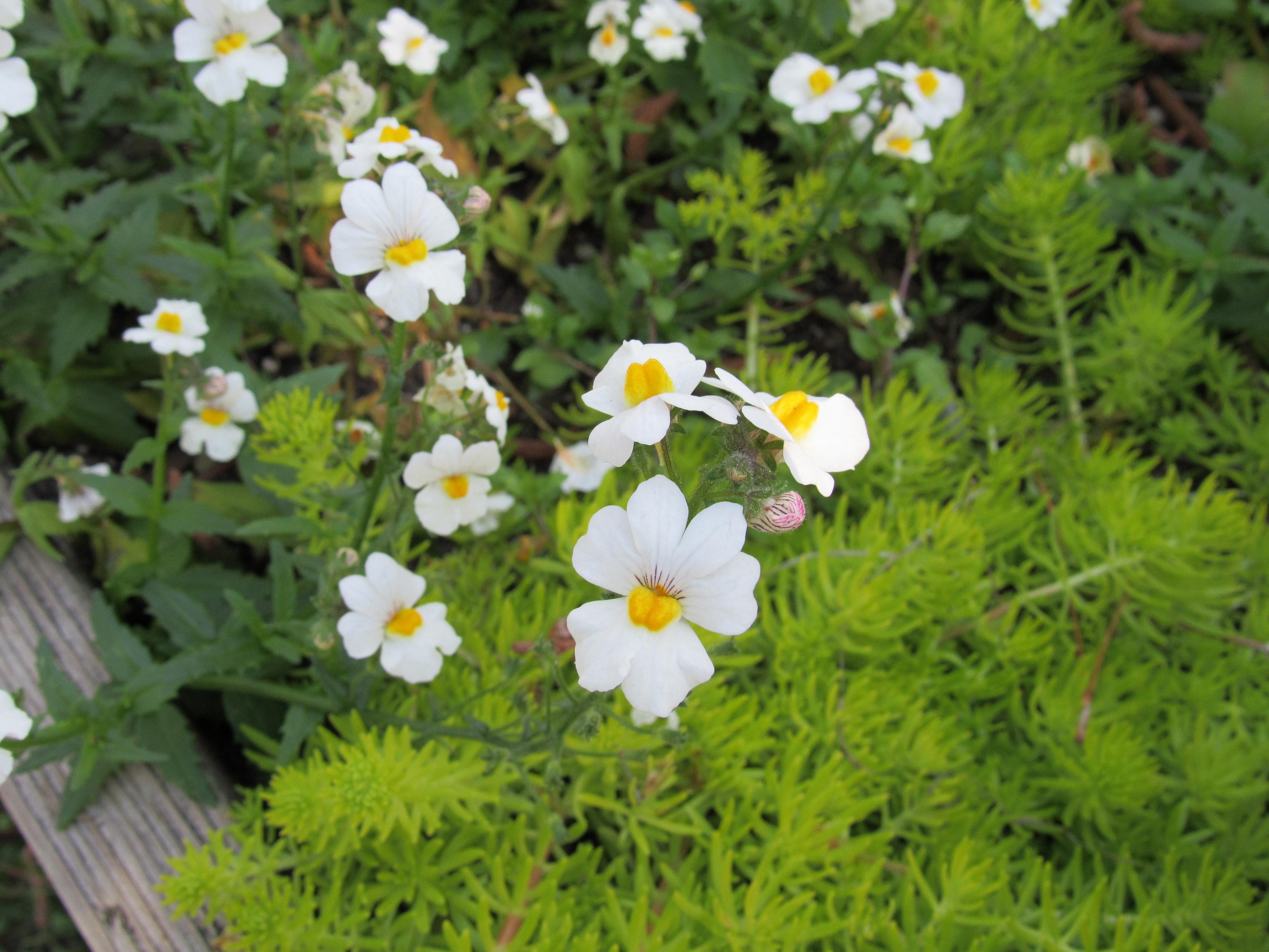 Dainty white flowers