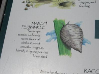 Marsh periwinkle board