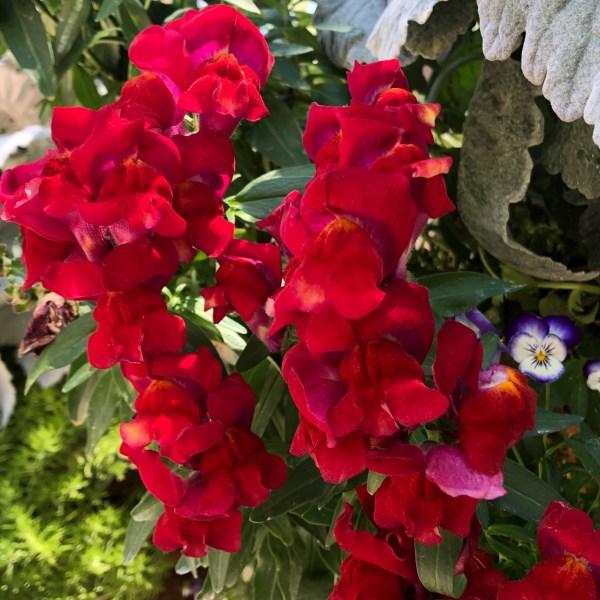 Scarlet red flowers